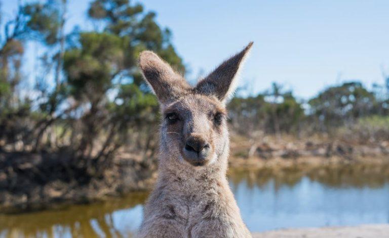 澳洲一年存多少\