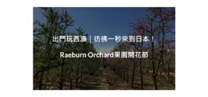 出門玩西澳 彷彿一秒來到日本! Raeburn Orchard果園開花節