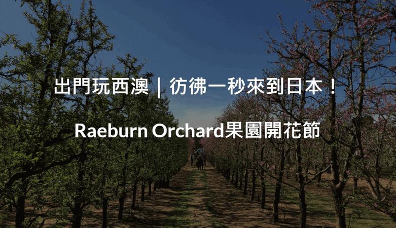 出門玩西澳|彷彿一秒來到日本! Raeburn Orchard果園開花節