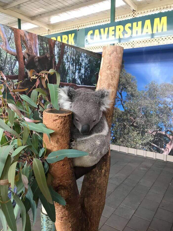 Caversham Wildlife Park伯斯野生動物園